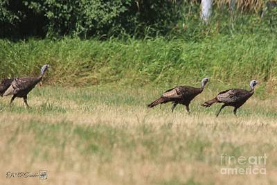 Photograph - Female Eastern Wild Turkey by J McCombie