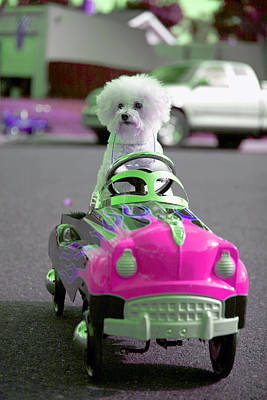 Best Friend Photograph - Fifi Goes For A Ride by Michael Ledray