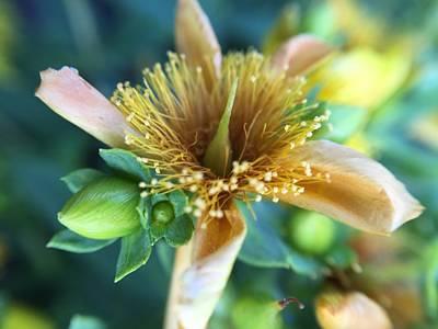 Photograph - Flower by Maxim Tzinman