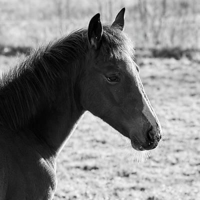 Photograph - Foal by Jouko Lehto