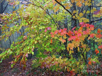 Forks Of Cranberry Trail Art Print