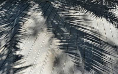 Photograph - Frond Shadows by JAMART Photography