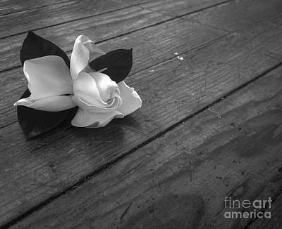 Photograph - Gardenia  by Angela Rath