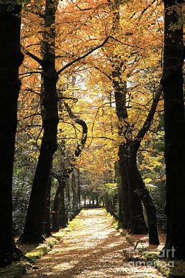 Gaspar Avila Photograph - Ginkgo Biloba Trees by Gaspar Avila