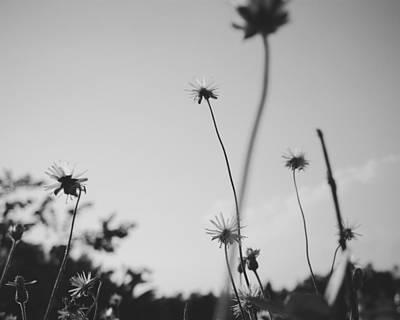 Photograph - Grass by Tran Minh Quan