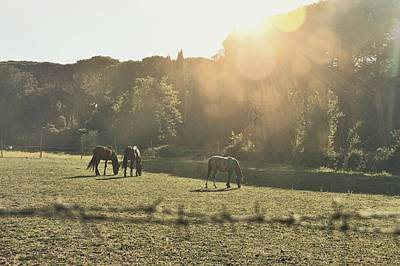 Photograph - Grazing In Rome by JAMART Photography