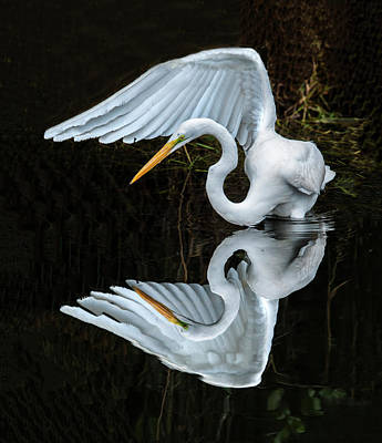 Great Egret Reflection Art Print