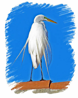 Photograph - Great Egret by T Guy Spencer