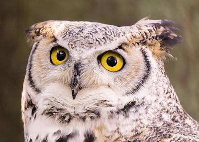 Great Horned Owl Art Print by Jim Hughes