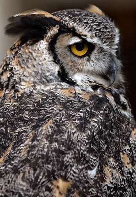 Animal Portraits - Great Horned Owl by JT Lewis
