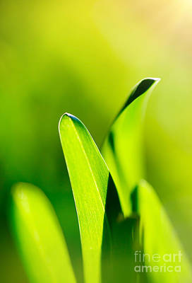 Photograph - Green Grass Background by Anna Om