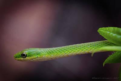 Photograph - Green Snake by Henri Irizarri