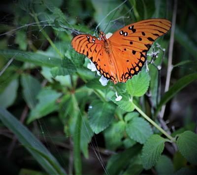 Photograph - Gulf Fritillary Butterfly by Warren Thompson