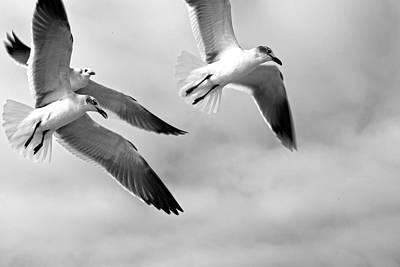 3 Gulls Art Print by Robert Och