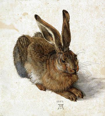 Durer Painting - Hare by Albrecht Durer