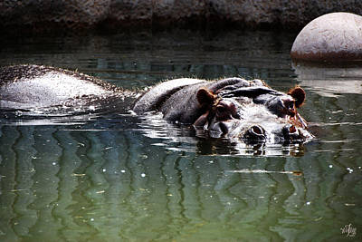 Hippo Print by Thea Wolff