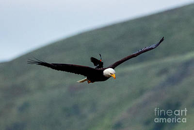 Photograph - Hitching A Ride by Mike Dawson