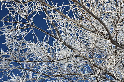 Photograph - Hoar Frost by Dacia Doroff