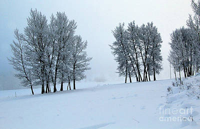 Photograph - Hoar Frost Morning by Roland Stanke