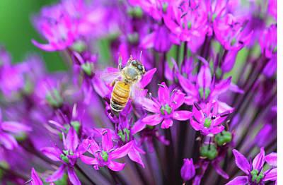 Photograph - Honey Bee by Tiffany Erdman