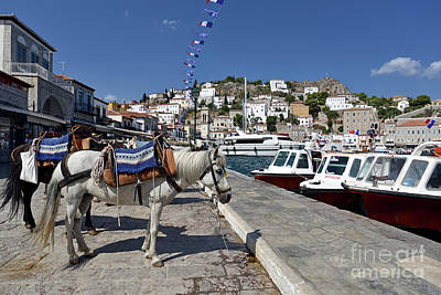 Photograph - Horses And Mules In Hydra Island by George Atsametakis