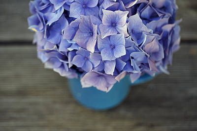 Metal Wall Art - Photograph - Hortensia Flowers by Nailia Schwarz