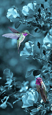 Photograph - Hummingbird Fantasy by Leda Robertson