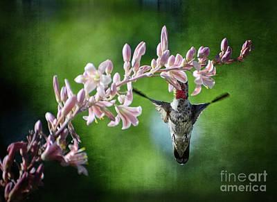 Hummingbird  Art Print by Saija  Lehtonen