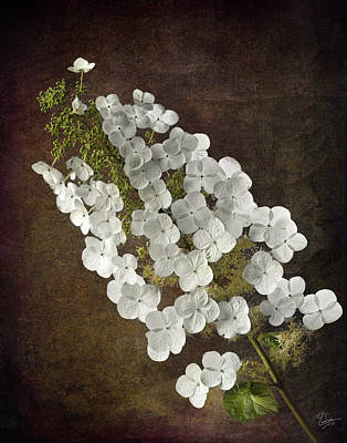 Photograph - Hydrangea by Endre Balogh