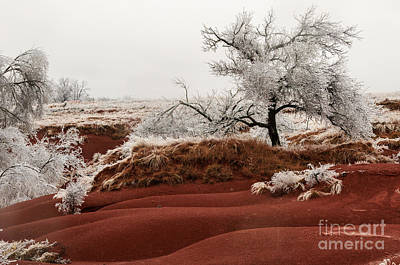 Photograph - Ice Storm by Richard Smith