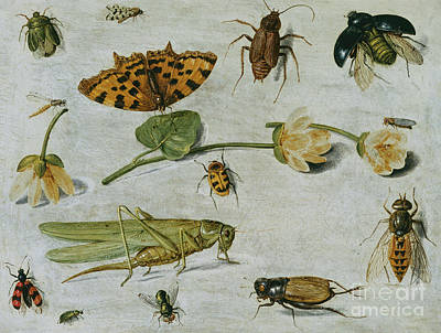 Grasshopper Painting - Insects by Jan Van Kessel