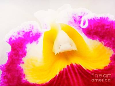 Orchid Photograph - Into Cattleya Orchid by MingTa Li