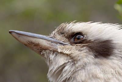 Photograph - Laughing Kookaburra by Karen Van Der Zijden