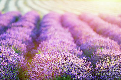 Relaxation Photograph - Lavender Flower Field At Sunset. by Michal Bednarek