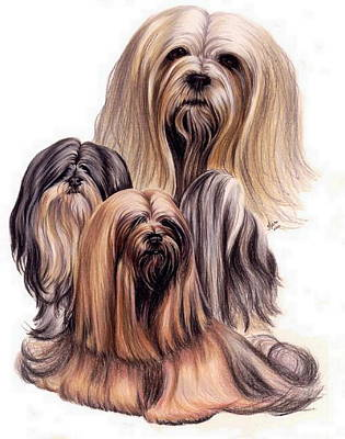 Purebred Dogs Drawing - Lhasa Apso by Barbara Keith