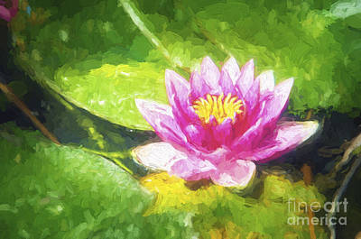 Photograph - Lily Pad by Jim And Emily Bush