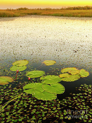 Lilies Photos - Lily Pads by Tim Hester