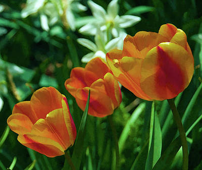 Print featuring the photograph 3 Lips Tulips by Sheryl Thomas