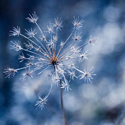Photograph - Lonely Winter by Ryan Heffron