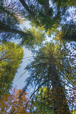 Photograph - Looking Up by Jean Noren