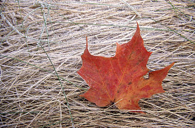 Photograph - Maple Leaf by Jim Vance