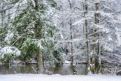 Photograph - March Snow Along Cranberry River by Thomas R Fletcher