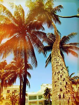 Photograph - Miami Palm Tree by France Laliberte