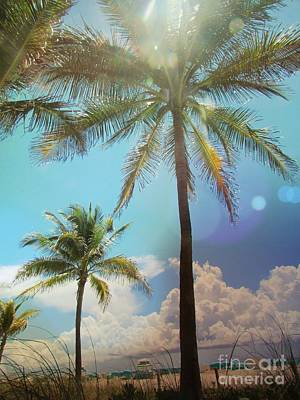 Photograph - Miami Palm Trees,  by France Laliberte