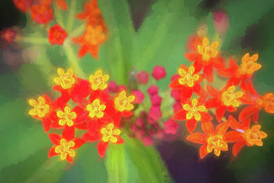 Photograph - Milkweed Flowers by Rich Franco