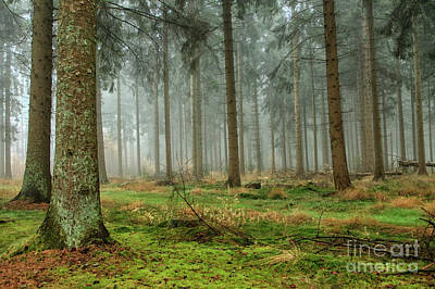 Photograph - Misty Forest by Patricia Hofmeester