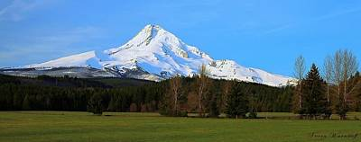 Photograph - Mt. Hood by Steve Warnstaff