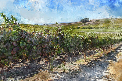 Winery Digital Art - Napa Valley California Vineyard by Brandon Bourdages