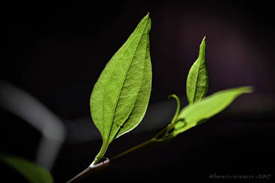 Photograph - New Leaves by Henri Irizarri