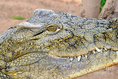 Crocodile Photograph - Nile Crocodile by George Atsametakis